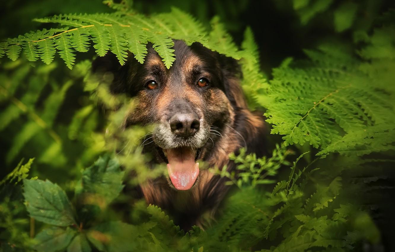 Фото обои друг, собака, папоротник