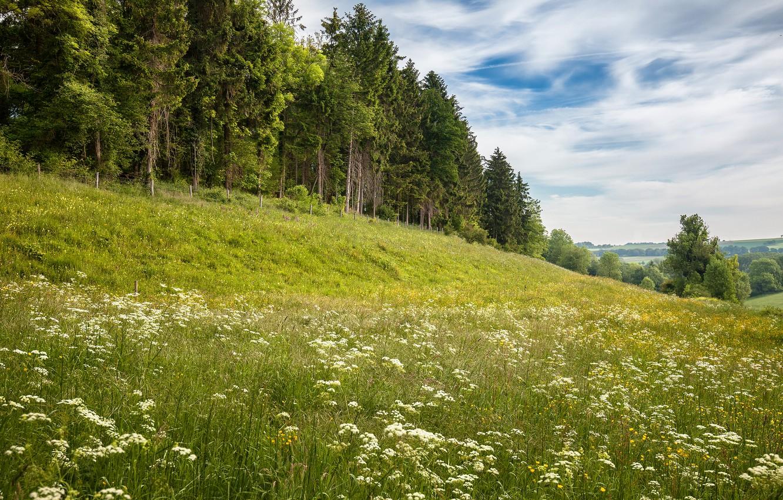 les-kholm-lug-sklon-tsvety-polevye-leto-oblaka-nebo-sosny-el.jpg