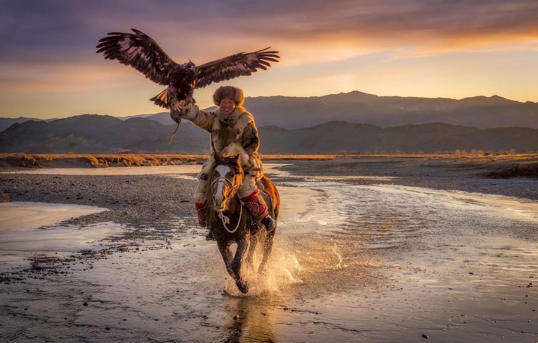Фото обои Eagle, Mongolia, Horse, eagle hunter, Ulgii