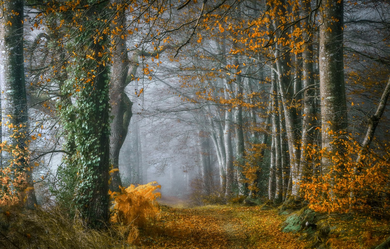 Фото обои дорога, осень, лес