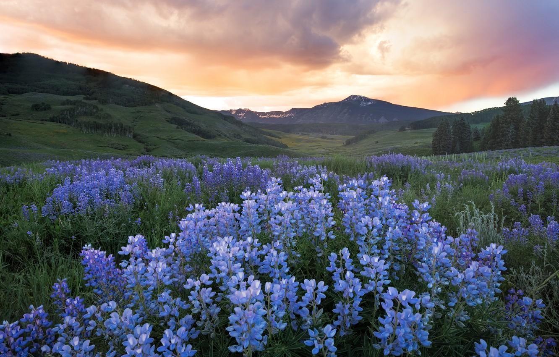 Картинка поле цветов и горы подарков