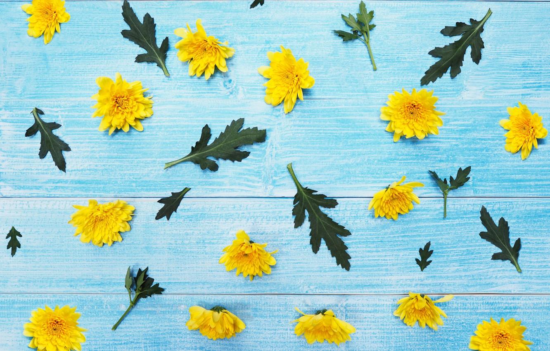 Фото обои цветы, желтые, хризантемы, yellow, wood, blue, flowers