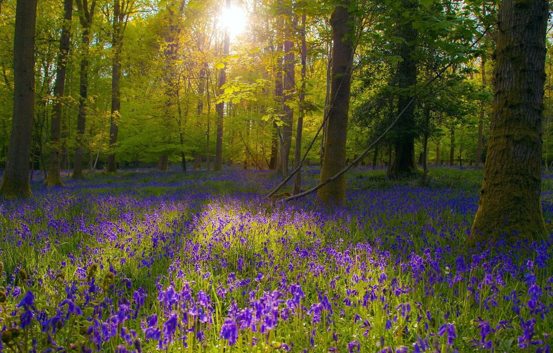 Фото обои лес, цветы, природа