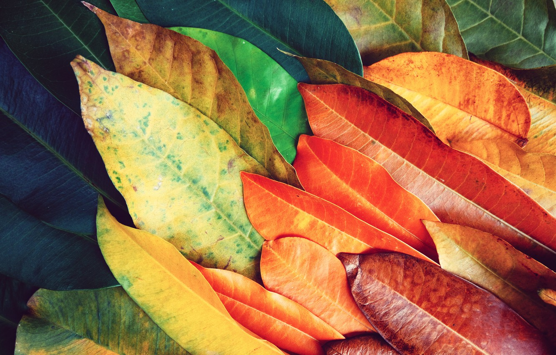 Фото обои листья, фон, colorful, texture, background, leaves