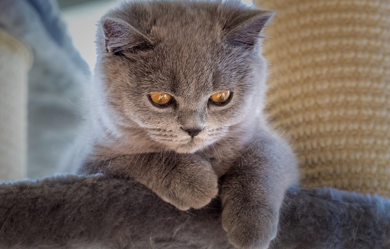 картинки сереньких кошечек когда они