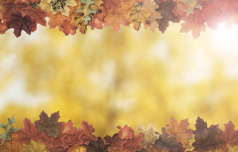 Фото обои осень, листья, фон, дерево, colorful, wood, background, autumn, leaves, осенние, maple