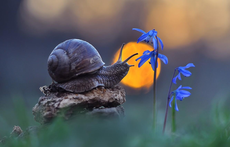 Фото обои макро, цветы, природа, улитка, боке