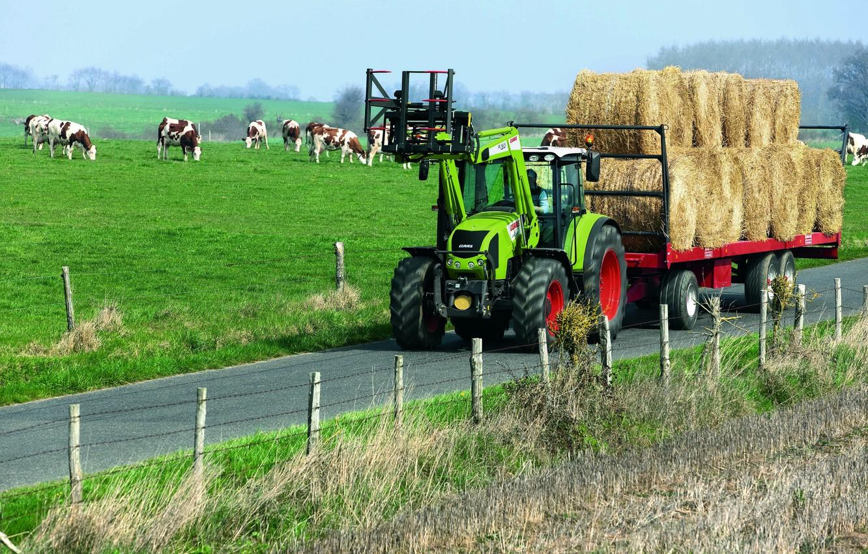 Фото обои сено, трактор, прицеп, стадо, Claas, Arion 400