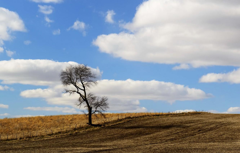 Фото обои поле, небо, дерево, забор