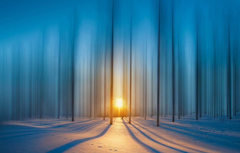 Фото обои лес, лучи, снег, Солнце, forest, snow, rays, sun, royhoo