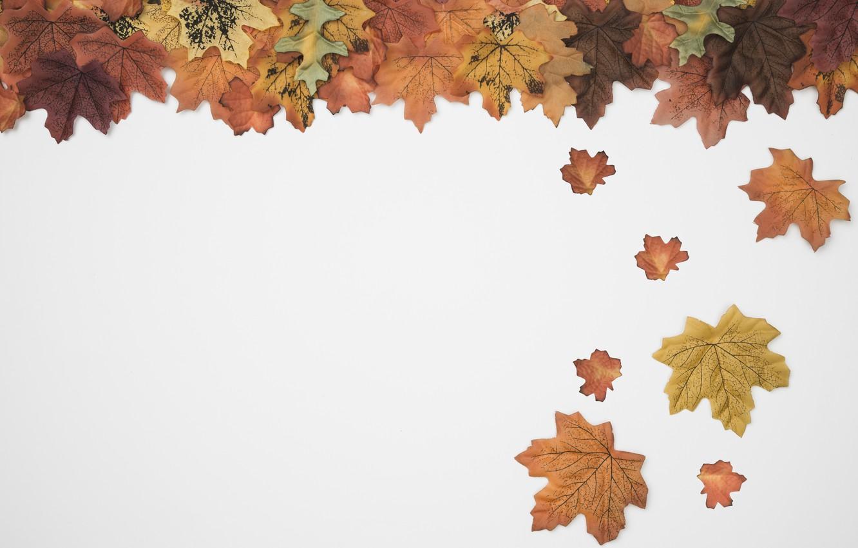 Фото обои осень, листья, фон, colorful, background, autumn, leaves, осенние, maple
