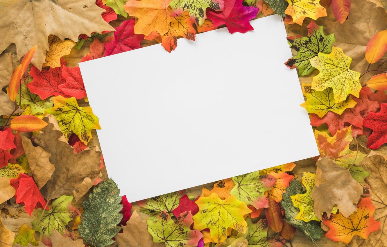 Фото обои осень, листья, фон, colorful, клен, wood, background, autumn, leaves, осенние, maple