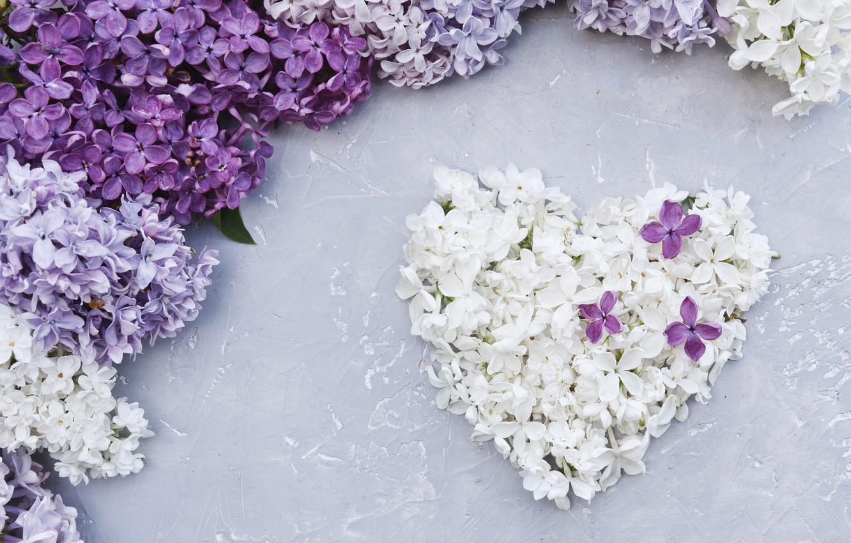 Фото обои цветы, сердце, love, white, heart, flowers, сирень, romantic, spring, purple, lilac, floral