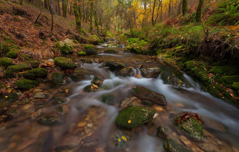Фото обои осень, лес, листья, ручей, камни, течение, мох, склон, речка