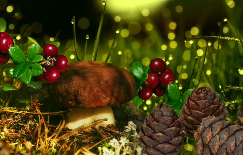 Фото обои осень, роса, ягоды, грибы, кедровые шишки