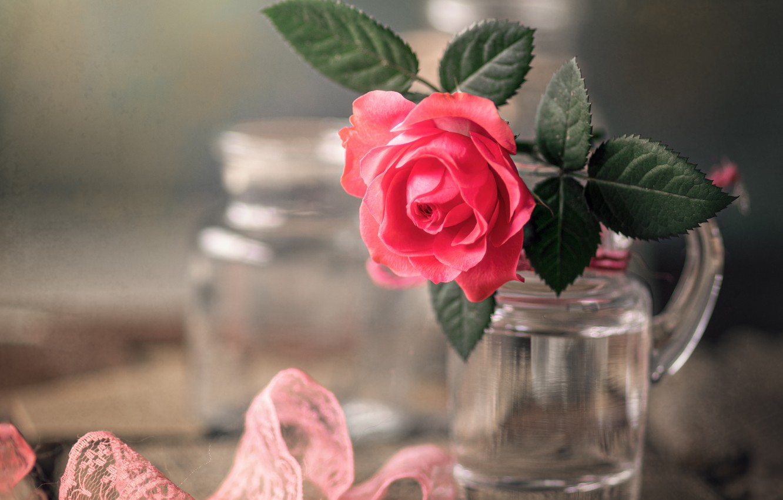 Фото обои цветок, макро, доски, роза, кружево