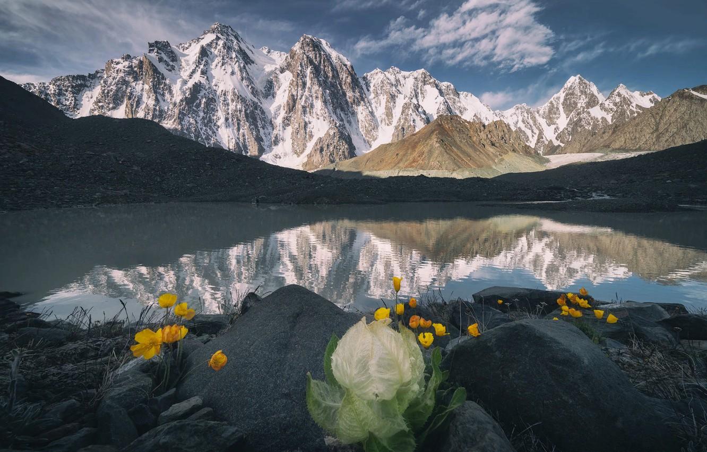 Фото обои пейзаж, цветы, горы, природа, озеро, камни, растительность, снега
