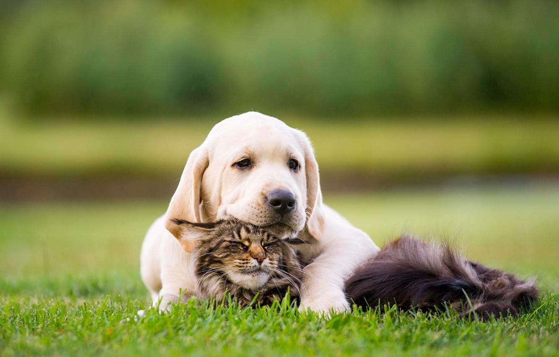 Обои кот, Собака, щенок. Собаки foto 14