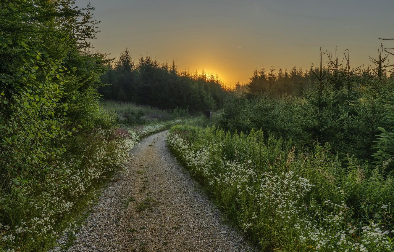Фото обои дорога, лес, лето