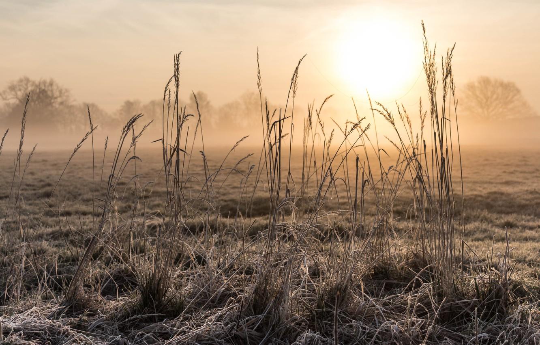 Фото обои поле, трава, природа, утро