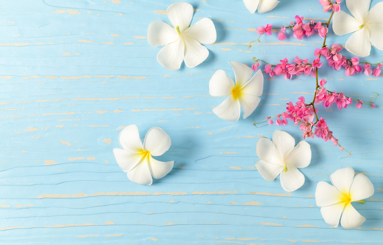 Фото обои цветы, white, белые, wood, flowers, плюмерия, plumeria