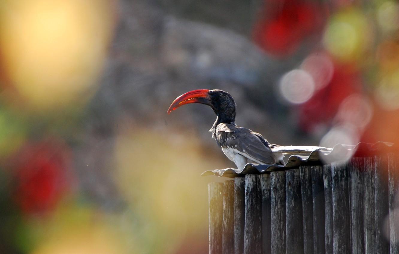 Фото обои Park, Namibia, Africa, Bird, Bill, Hornbill