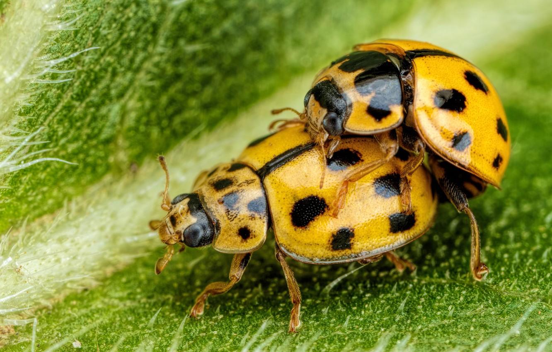 фотоцентр желтый жук нам