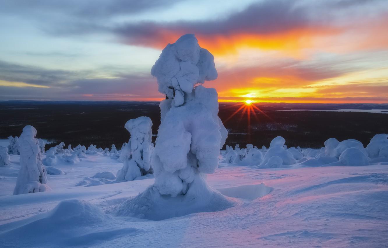 Фото обои зима, солнце, лучи, снег, деревья, пейзаж, природа, ели, Кольский полуостров
