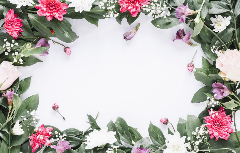 Фото обои цветы, рамка, colorful, pink, flowers, frame, floral