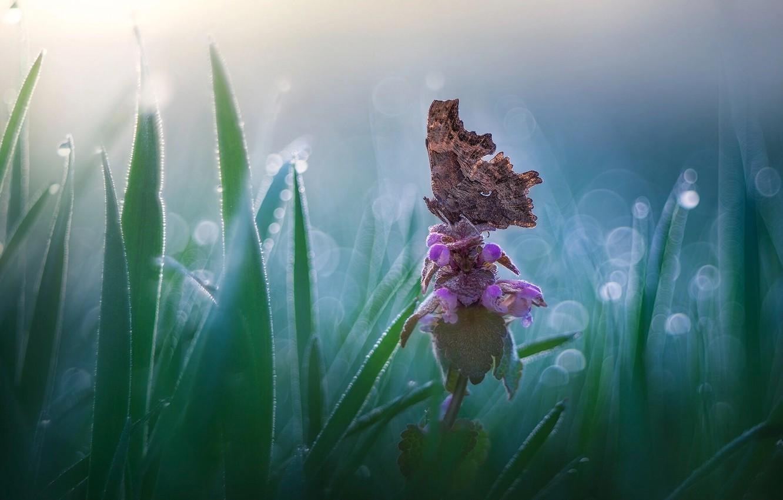 Фото обои цветок, трава, природа, бабочка, боке, Roberto Aldrovandi