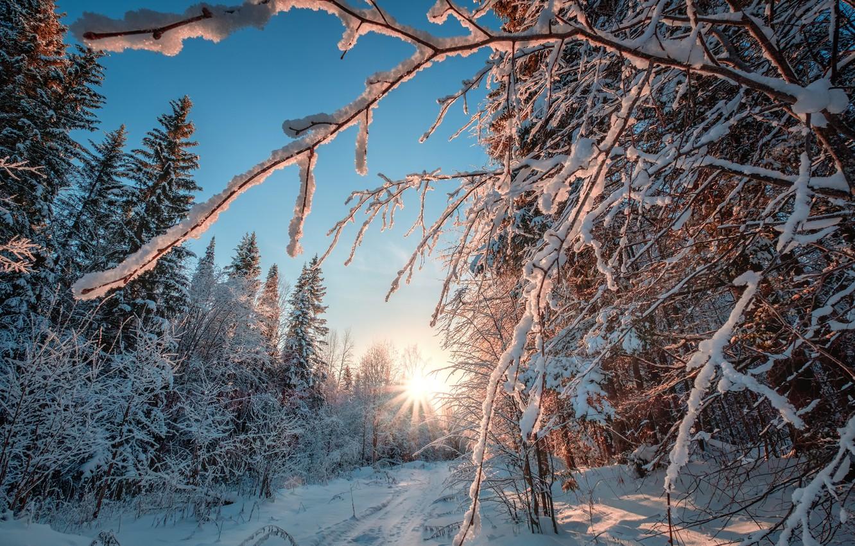 Фото обои зима, лес, солнце, лучи, снег, деревья, мороз, Пермский край