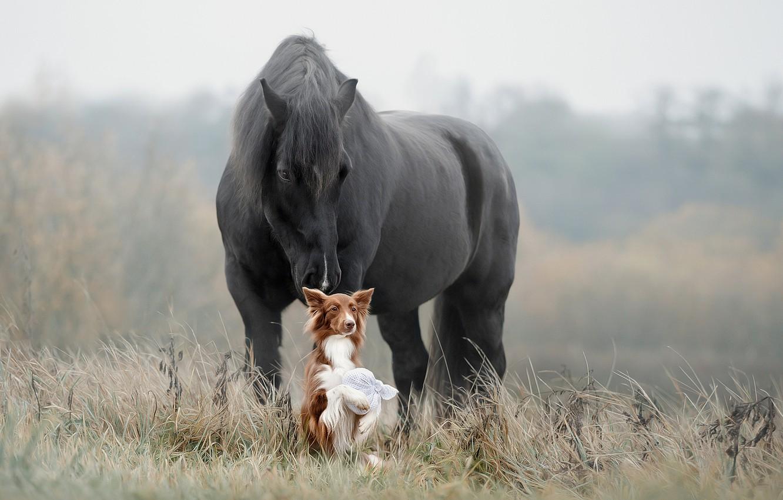 Фото обои трава, лошадь, собака, друзья, Светлана Писарева