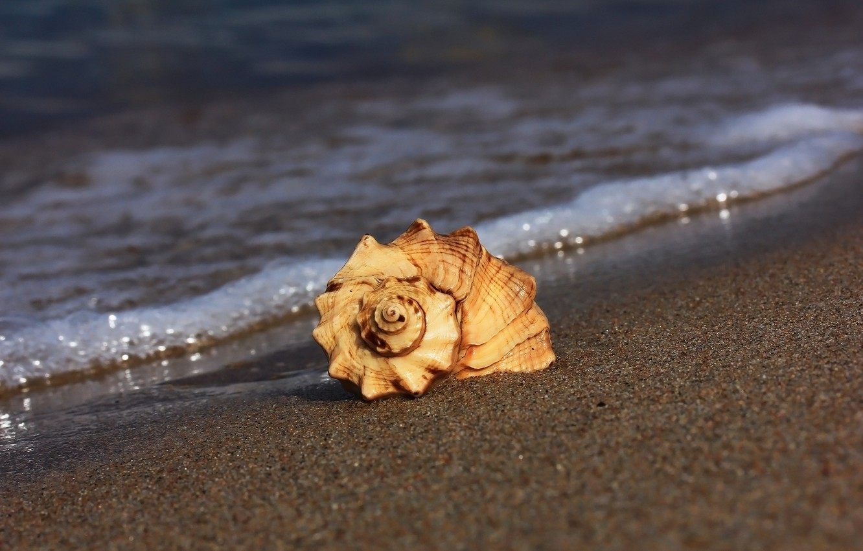 Фото обои песок, пляж, ракушка