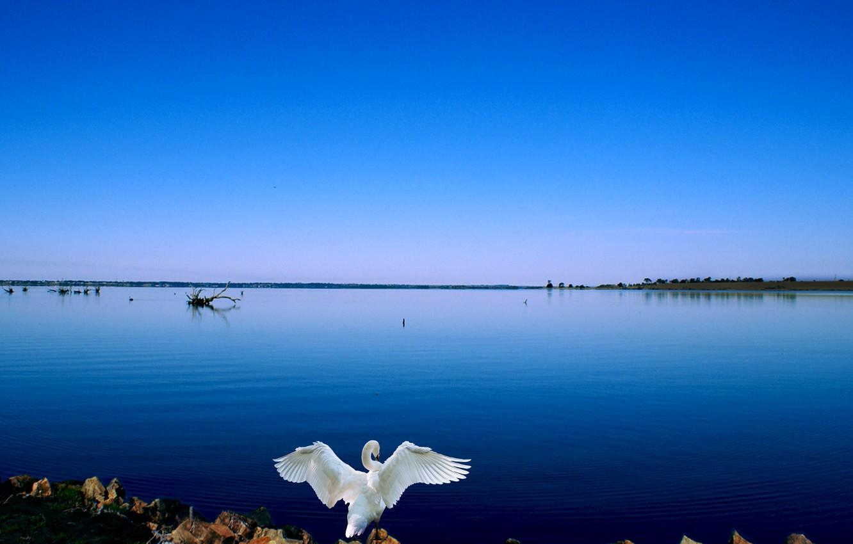 Фото обои swan, lake, blue sky