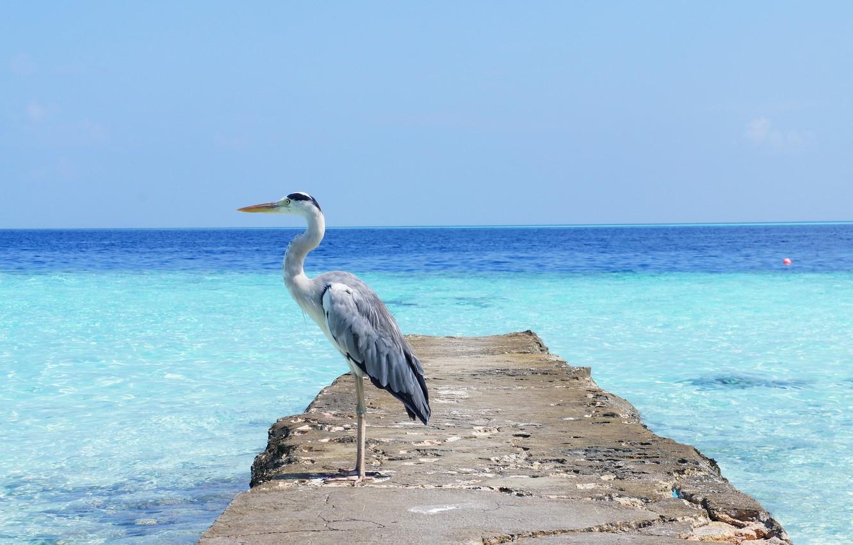 Фото обои sea, ocean, heron, scaffolding