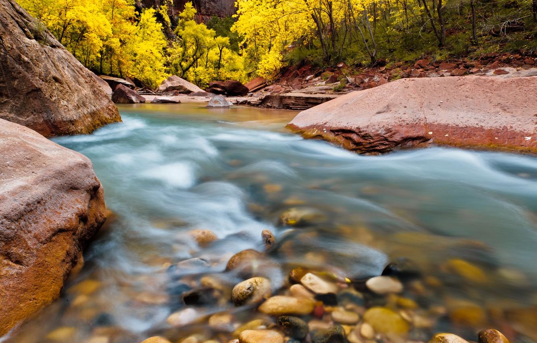Фото обои деревья, природа, река, камни, скалы, Юта, США, Национальный парк, National Park, Zion, Зайон
