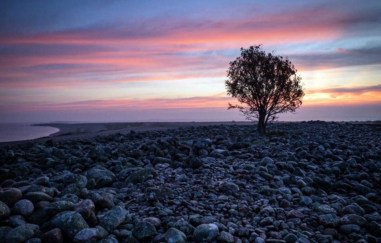 Фото обои закат, дерево, берег