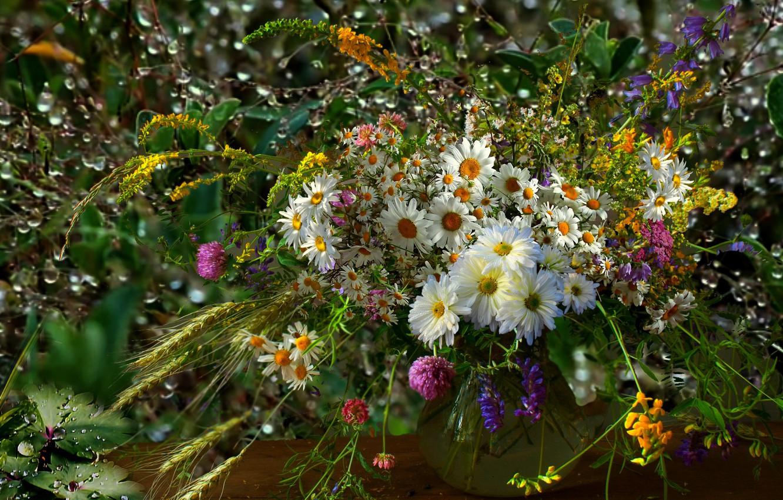 Фото обои роса, ромашки, Букет