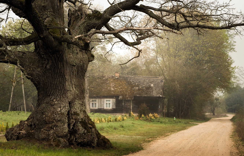 Фото обои дорога, дом, дерево
