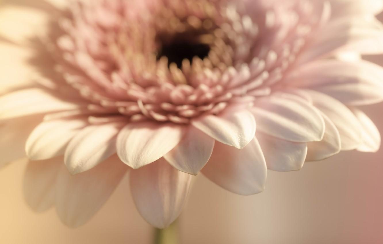 Фото обои цветок, макро, фон