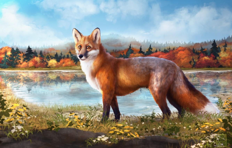 Фото обои осень, небо, деревья, природа, озеро, лиса, риснок, Cryptillian