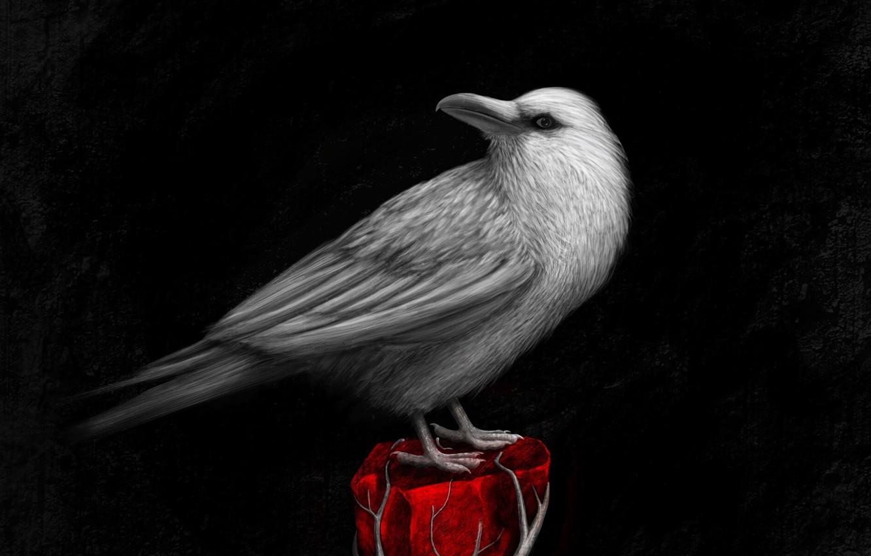 Фото обои птица, арт, ворон, bird, raven, art