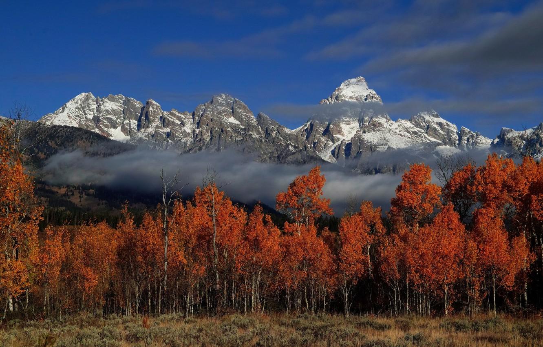 Фото обои осень, лес, пейзаж, природа, город, красота, ьучи