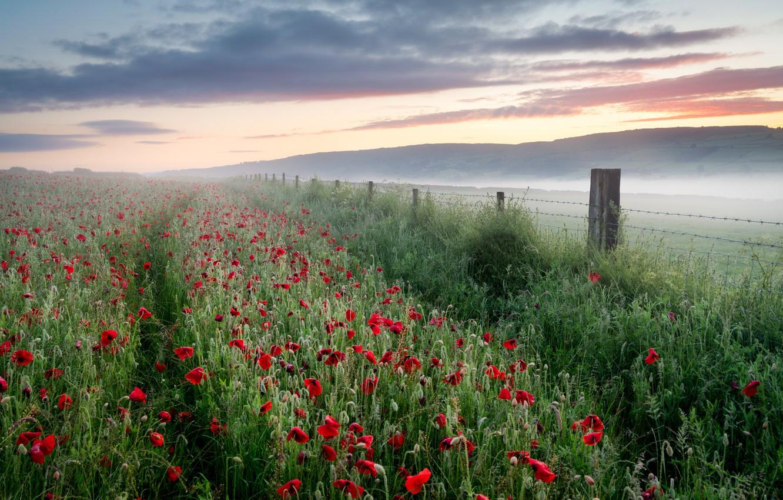 Фото обои поле, лето, туман, маки