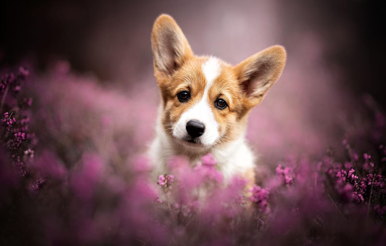 Картинки собак на обложку