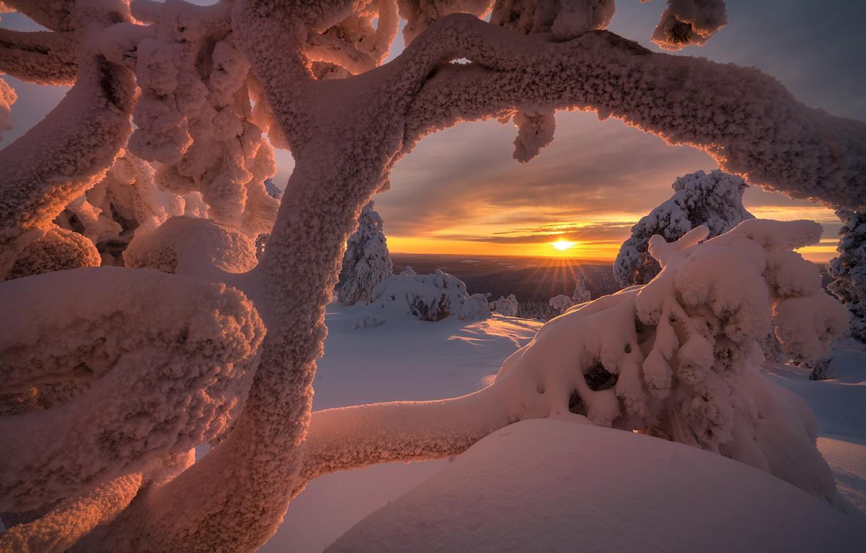 андрей зима фото тонкостях выращивания