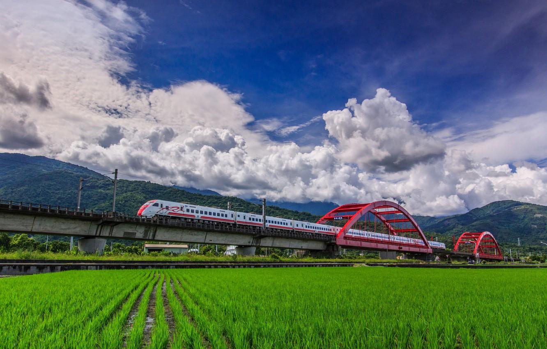 Фото обои поле, мост, поезд
