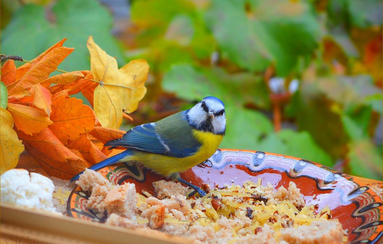 Фото обои Листья, Птичка, Bird, Leaves