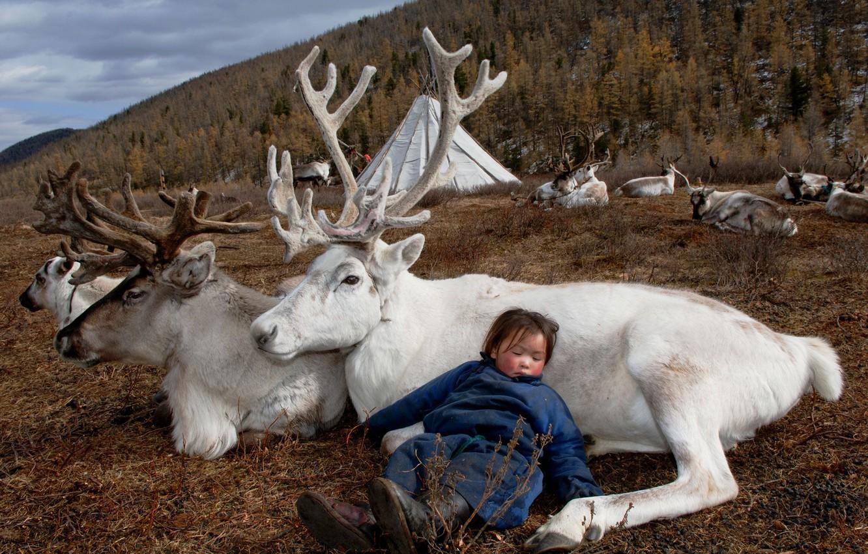 Обои природа, жизнь, девочка, олени, Монголия картинки на рабочий стол,  раздел настроения - скачать