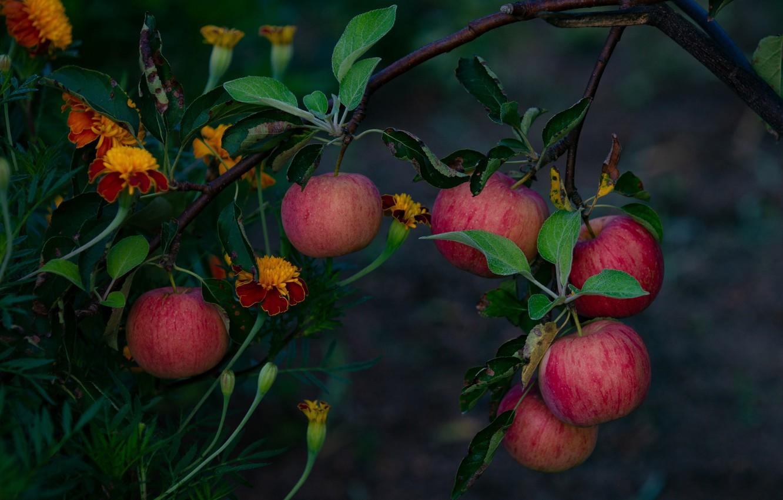 уже цветы яблоки листья картинки всего